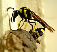 Wasp At Work by Vanessa Barklay
