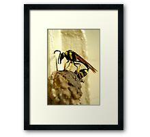 Wasp At Work Framed Print