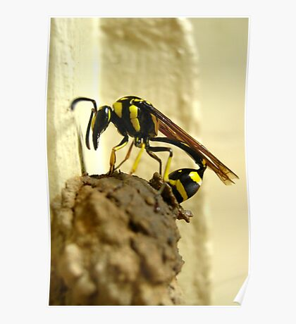 Wasp At Work Poster