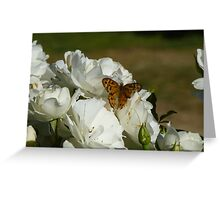 Butterfly white rose Greeting Card