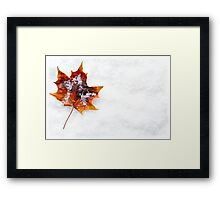 Fallen Leaf in the Snow Framed Print