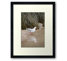 See Me Scream Framed Print
