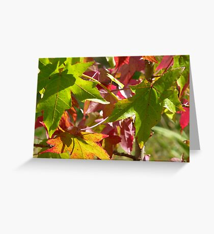 Autumn in Summer Greeting Card