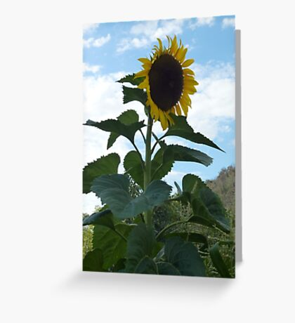Reach for the sky Greeting Card
