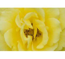 Banana Split Photographic Print