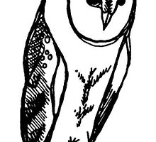 The Perched Barn Owl by AnimalDreaming