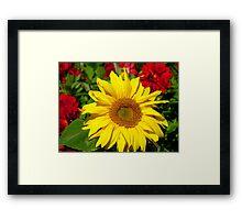 The Sun On A Cloudy Day - Sunflower - NZ Framed Print