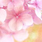 Pink Hydrangea Dream ... Beautiful Soft Pink Hydrangea Flowers by StarFlowerSt