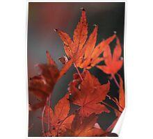 Autumn Leaves V Poster