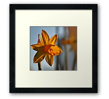 Sun setting on the petals Framed Print