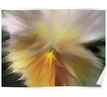 Pansy Art Poster