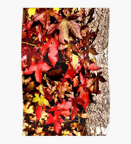 Autumn Leaves VI Poster