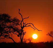 African sunset by Peregrinate