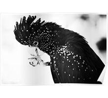 Majestic Cockatoo Poster