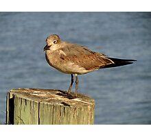 Avian Profile ~ Part Ten Photographic Print