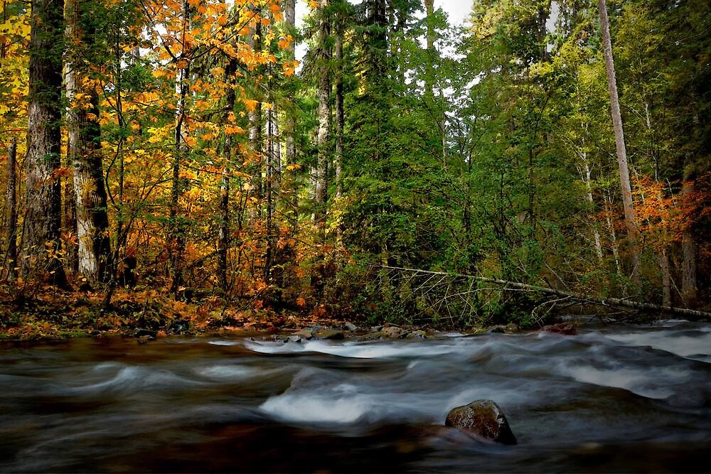 Fall On The River ~ Roaring River ~ by Charles & Patricia   Harkins ~ Picture Oregon