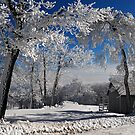 Winter Morning by Lois  Bryan