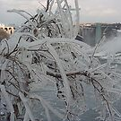 Ice Tree by Sarah Tweedie