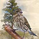 Pine Siskin by Bryan Peterson
