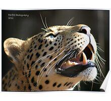 leopard smile Poster