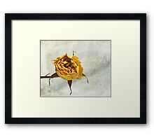 Withered Rose #2 Framed Print