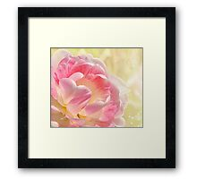 Pink and White Tulip Framed Print