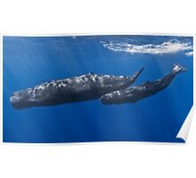 Adorable Sperm Whale Poster