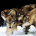 The pack by John Ryan