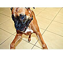 Playful Dog Photographic Print