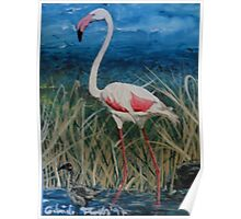 Flamingo With Offspring Wading Through Rivergrass Poster