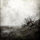 Misty tree by pawelmatys