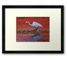 White Egret Wading In The Sunset Framed Print