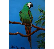 A Jubilant Green Macaw, All Alone Photographic Print