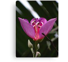 Opening Blossom - Flor Abriendose Canvas Print