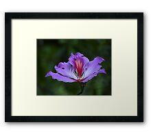 The Beauty Is Open - La Belleza Esta Abierta Framed Print