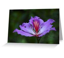 The Beauty Is Open - La Belleza Esta Abierta Greeting Card