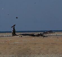 falcon favorite by tamarama