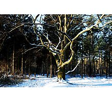Saying Goodbye to winter Photographic Print