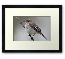 Flame Robin - Female Framed Print
