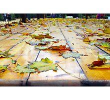 Selective focus on fallen autumn maple leaves Photographic Print