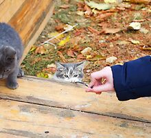 Two homeless kitten playing with a stick by vladromensky