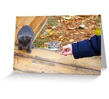 Two homeless kitten playing with a stick Greeting Card