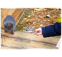 Two homeless kitten playing with a stick Poster