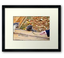 Two pretty little kitten played with a stick in the autumn park Framed Print