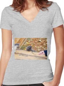 Two pretty little kitten played with a stick in the autumn park Women's Fitted V-Neck T-Shirt