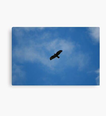 Falcon in flight Canvas Print