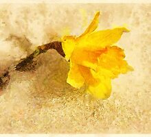 Daffodil Spring by Carolyn Wright