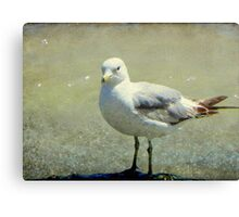 What are you looking at??? © Canvas Print