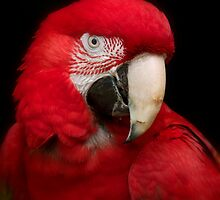 Polly Want A Cracker by Jeff Weymier