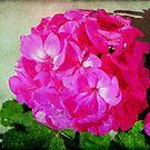 Pretty Pink © by Dawn M. Becker